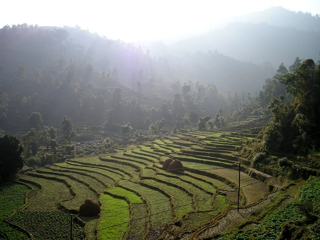 Nepal rice fields