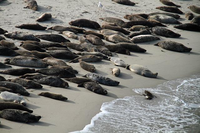 Sea Lions San diego